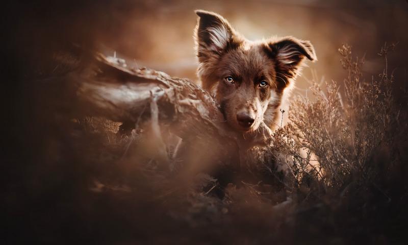 собака и лес