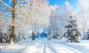 зимний лес в России