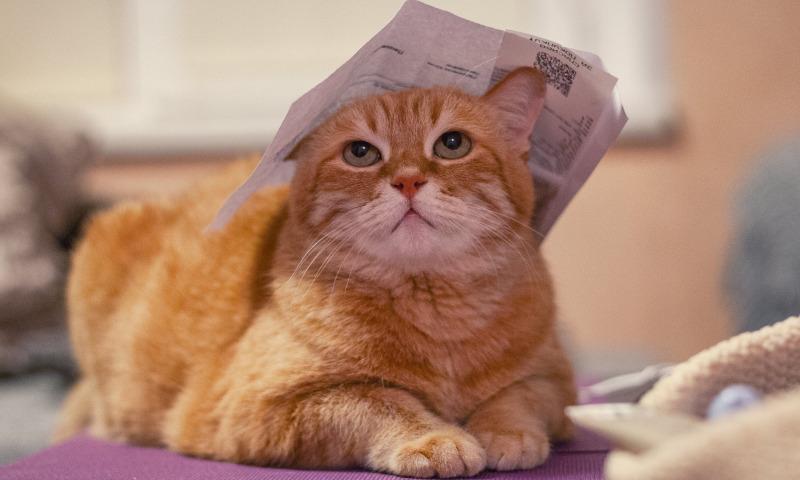 кошка с бумагой