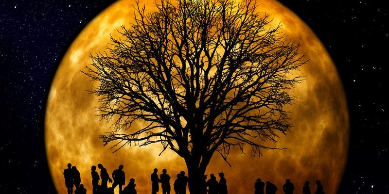 дерево луна