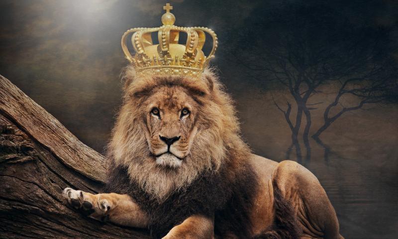 лев корона