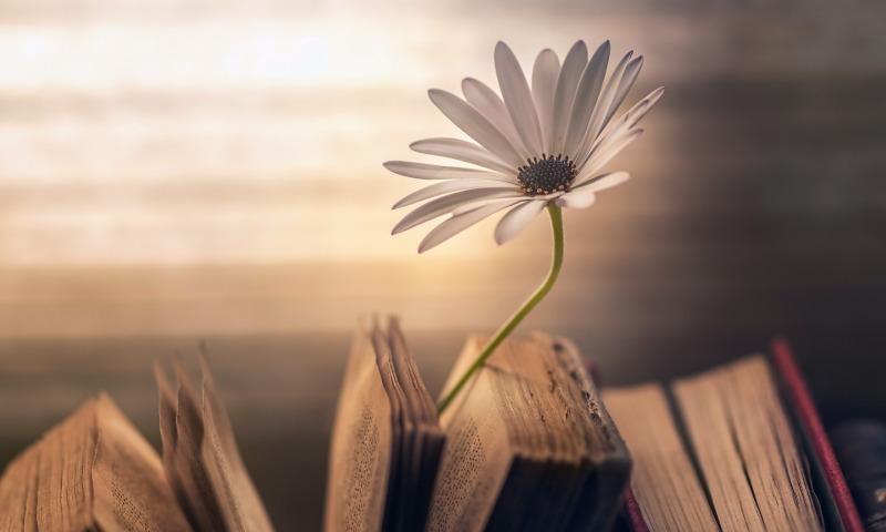 книги и цветок