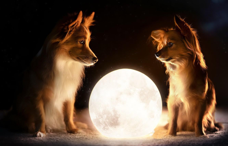собаки шар