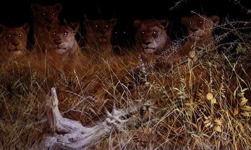 ночь охота