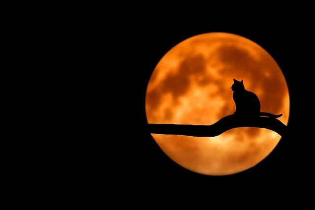 луна и кот